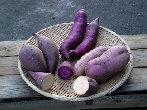 自然栽培さつまいもお試しセット(シルクスイート、パープルスイートロード、安納芋)各種約500g