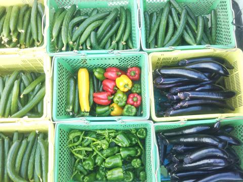 配送日未確定の【ライトパック】 冬物野菜の種蒔き中につき発送日がお約束できませんが 宜しいでしょうか? 田口農園イチオシ 世界農業遺産  ブランド認定野菜詰合せ