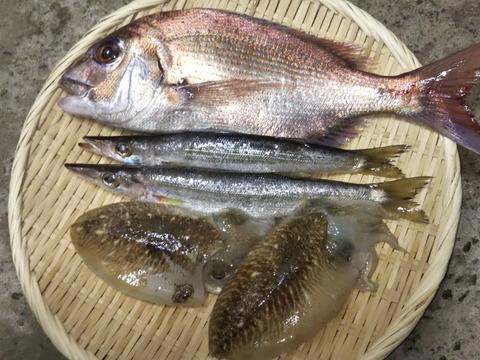 季節の詰め合わせ3~4魚種①