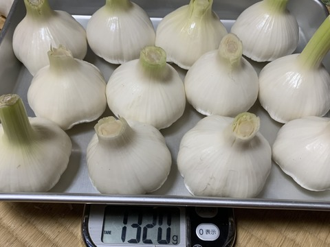 自然栽培 生にんにく 1.3キロ 大玉12個