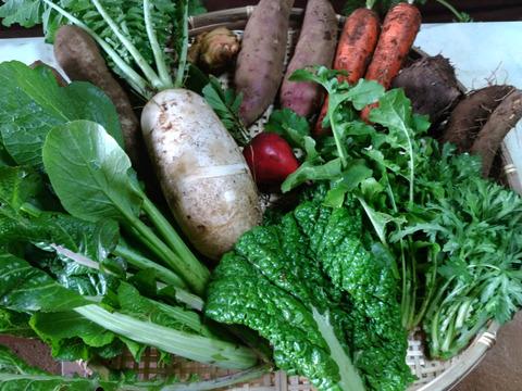 農薬・化学肥料不使用のこだわり旬の野菜セット