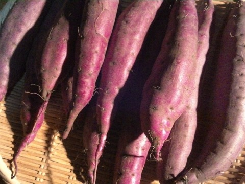 自然栽培のさつまいも(ベニハルカ)約10~14本入り2kg