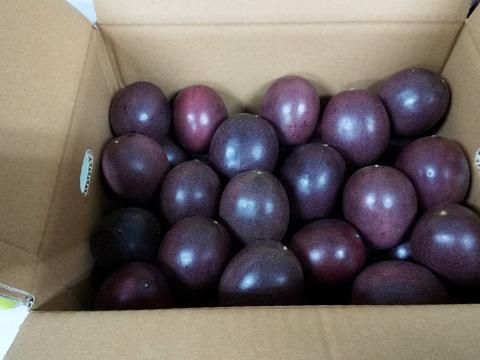 【予約販売7月中発送】1度は食べとこ!女性に人気5kg農薬不使用パッションフルーツお得!