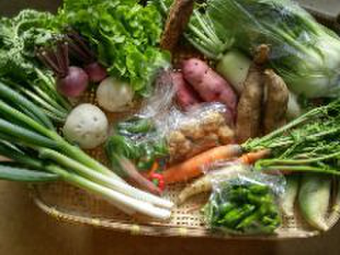 旬の野菜の詰め合わせ(8~14品)