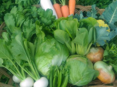 旬のおかやま有機無農薬認証野菜お試しセット (5~8種類)