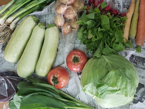 『夏ギフト』詰め込み!夏の京野菜満足セット❗【100サイズ】【7~9品目】