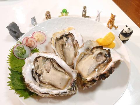 たっぷりミルクの!超特大!岩牡蠣(3kg)島根町 野井産