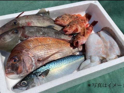 ☆海鮮パックの詰め合わせ☆ 鮮魚 海の幸 採れたて 瀬戸内海 天然 漁師 刺身 海産物