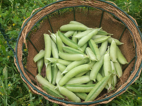 【自然栽培セット】「うすいえんどう」(1kg)+「乾燥うすいえんどう150g」