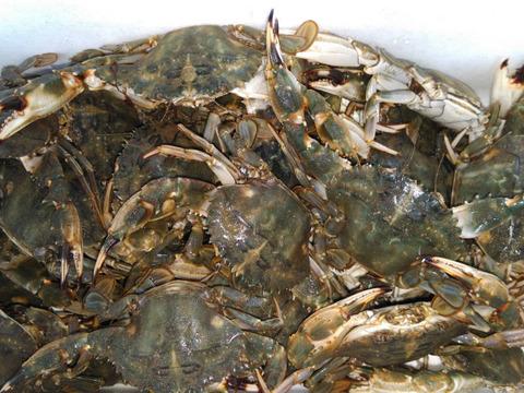 冷凍出荷!カニ汁用!石蟹小サイズ10kg イシガニ(ワタリガニ)味噌汁などに 約240杯くらいです。