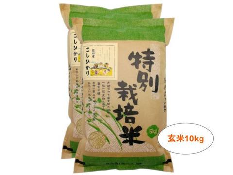 【玄米10kg】残留農薬ゼロ!情熱の結晶!つぶ感が人気の信州産こしひかり(5kg×2袋) 令和2年産
