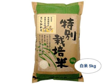 【白米5kg】信州産 農薬不使用米 こしひかり【受注精米】令和2年産