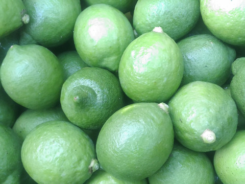 防腐剤、ワックス不使用 安心レモンとミカン3個 合計2kg