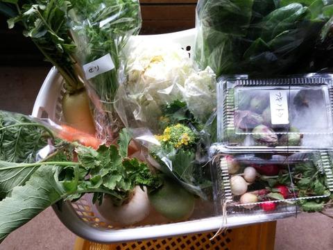 旬の野菜の詰め合わせ(10品)