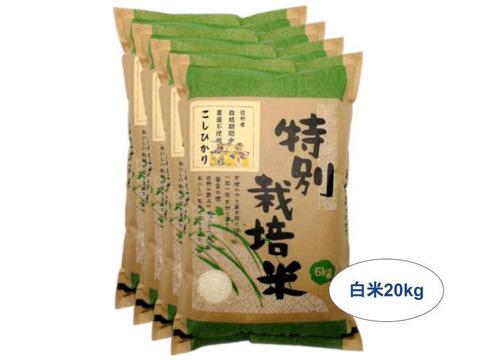 【白米20kg】信州産 農薬不使用米 こしひかり (5kg×4袋) 令和2年産