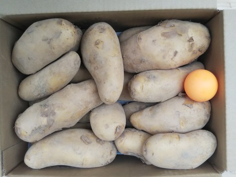 増量5Kg 【おいしさぎっしり メークイン じゃが芋】 畑から直送  土付きですので保存が利きます。 世界農業遺産 にし阿波傾斜地農耕システムブランド野菜
