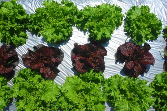 梅雨空をぶっ飛ばせ~元気野菜セット*農薬/化学肥料・不使用