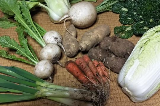 【自然栽培】旬のお野菜セット〜約7種〜