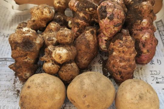 カラダに優しい冬の根菜セット(1kg)