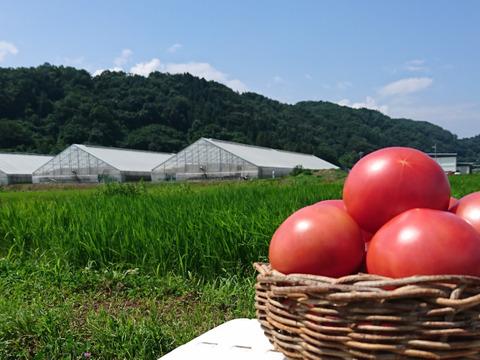 訳アリ!フレッシュファクトリー『陽の香り』長野の自然が育てた恵 桃太郎トマト4キロ箱※バジルおまけ付