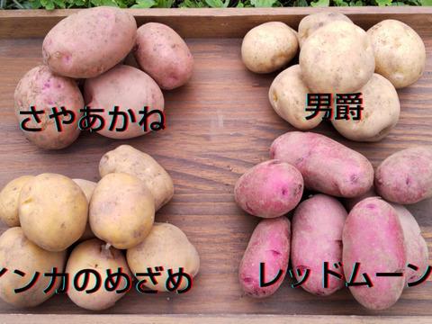 新じゃが食べ比べ4種!農薬・化学肥料不使用のじゃがいも詰め合わせ 2Kg