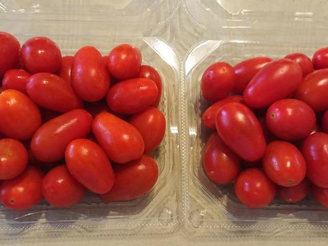 高糖度、高リコピン、生で美味しいミニトマト(1キロ) 生で食べるなんてもったいない!加熱するとズット美味しい。トマトすき焼きに最適。中玉トマト(1キロ)