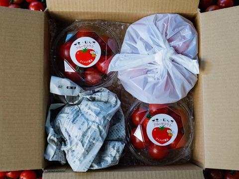 【お試しパック】極上フルーツトマト「ポモロッサ」(2パック+おまけ付)