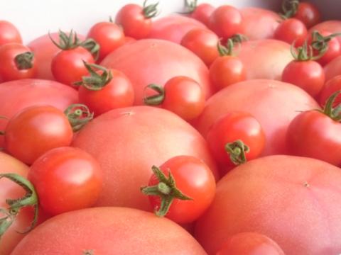 【常温便】受賞歴3回!②のオマケ❗️訳ありソムリエトマト5kg(18玉~36玉)希少な高濃度フルーツトマト