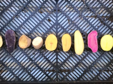 9つの品種からジャガイモ食べ比べ4.5kgセット♪