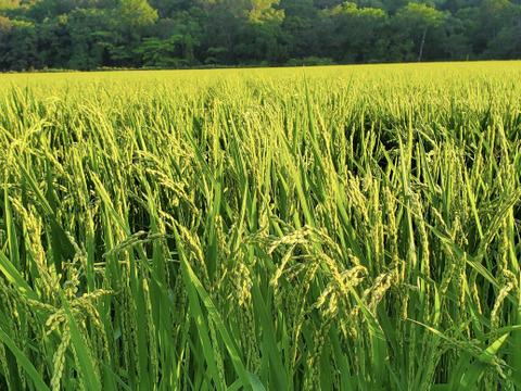早期予約 【令和2年度産】 北海道米 ゆきひかり 5kg×2個