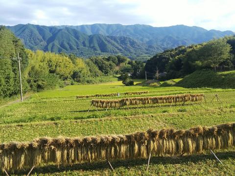 天日干しのお米の味は格別です。玄米5キロ
