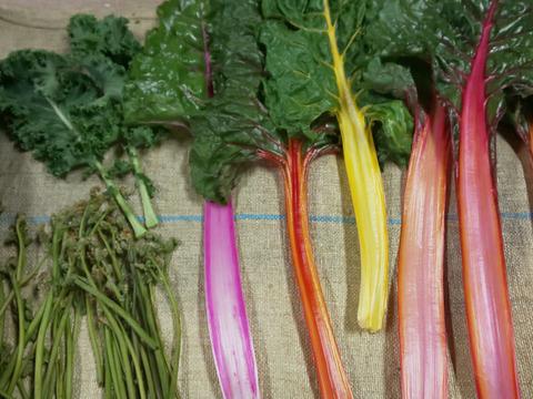 野菜&山菜セット