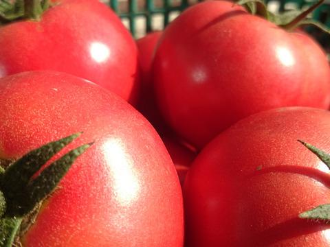 冷やして美味しい! 完熟トマト 2kg