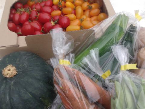 【タップリ!!お得セット】北海道から野菜詰め合わせ トマトと色々な8種類以上