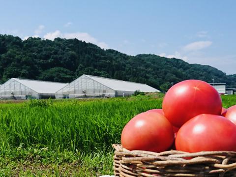 ☆訳アリ☆『陽の香り』4キロ箱 長野の自然が育てた恵 桃太郎トマト