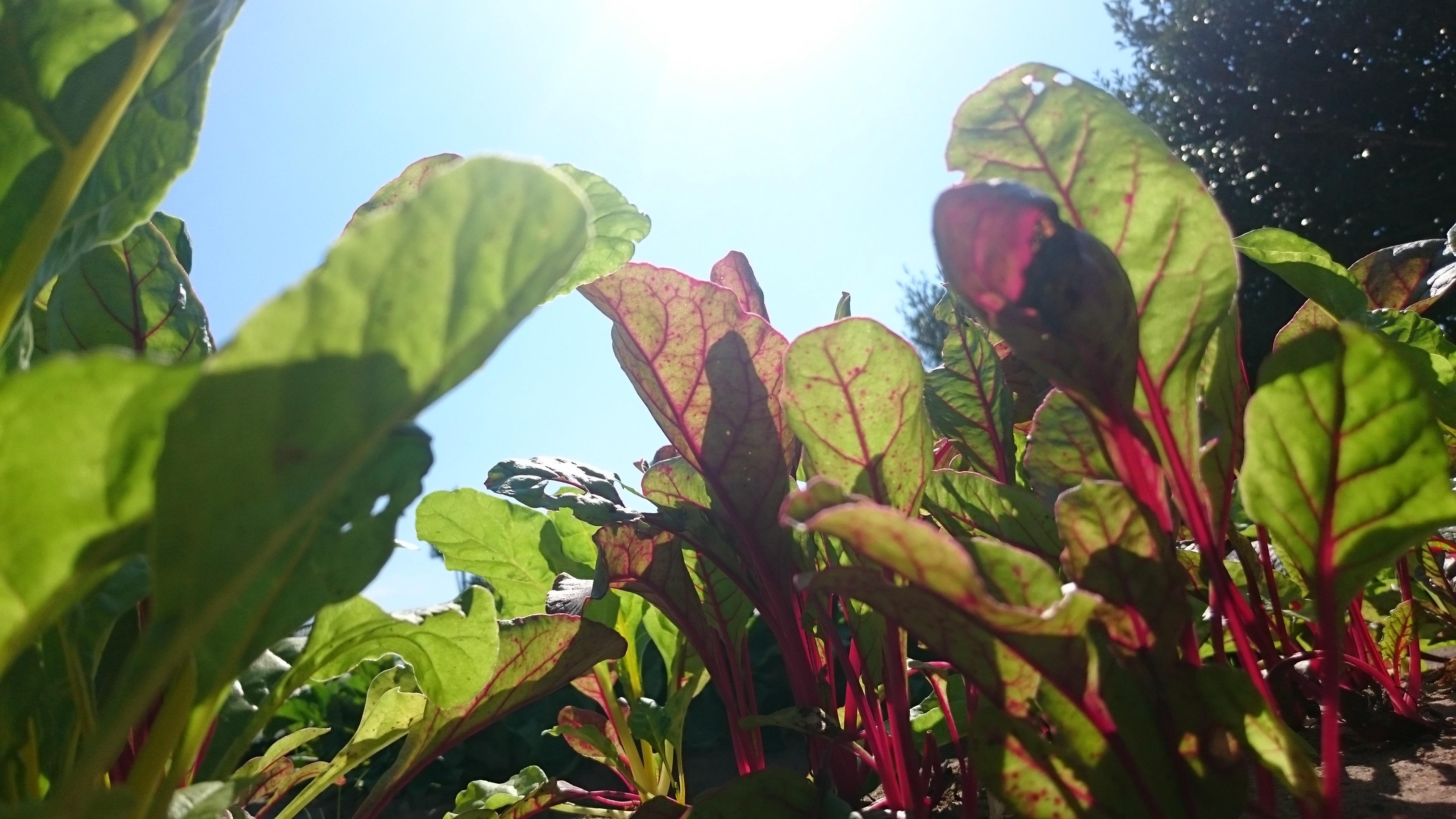 fe1eb16bf5 なかの農園の紹介:石川県 食べチョク 農家直送・安心・新鮮な有機野菜のネット通販