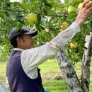 田村りんご農園