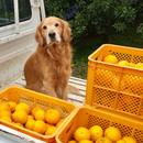 オレンジヒルズ松本農園