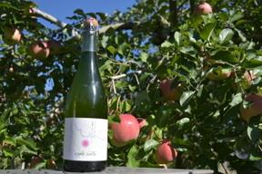 アップルシードル(甘口)✨りんごの発泡酒✨