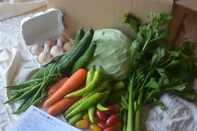 さいのね畑の野菜・タマゴ 共同購入お徳用 18~24パック