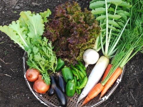 無農薬無化学肥料野菜セットL サイズ