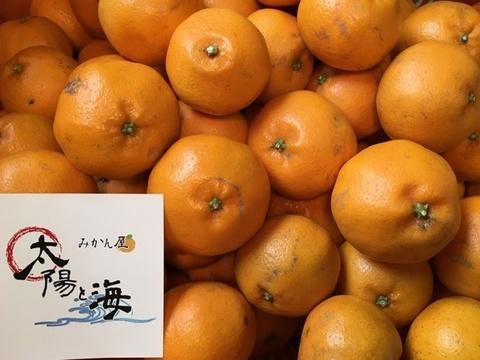 愛媛のはるみ☆混合サイズ☆ご家庭用☆5kg