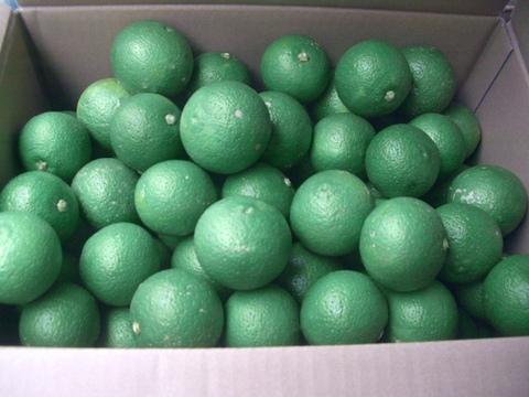 【果汁たっぷり】大分特産 カボス 5キロ 農薬不使用(自然栽培)