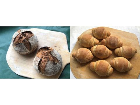 【超貴重な有機JAS認証パン】パンセット⑤+⑥:麦の栽培から一貫生産 自然栽培小麦のみ使用したフランス田舎パン×2 + テーブルロール×8