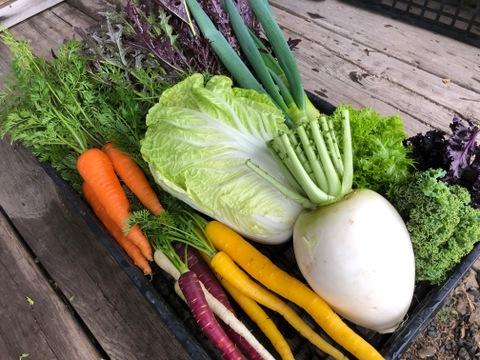 【旬の自慢野菜】自然栽培、べっぴんやさいセット(80サイズBOX)