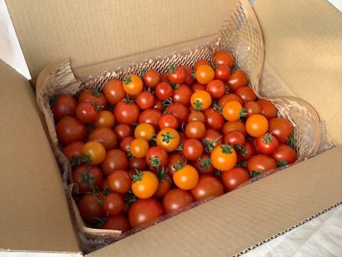 イスラエルの中玉トマト・ミニトマト2種と各国のもう1種・★計3種1.3kgバラ詰