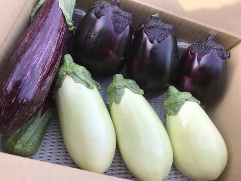 日本一のブランド茄子🍆『りんごあめ🍎』 茄子食べ比べ3種セット