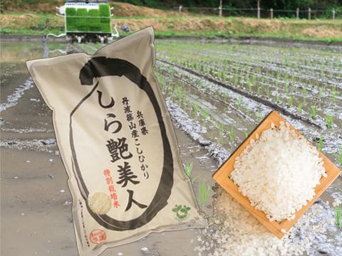 お米マイスターが作る旨みたっぷりの丹波篠山米10㎏【R1年産】