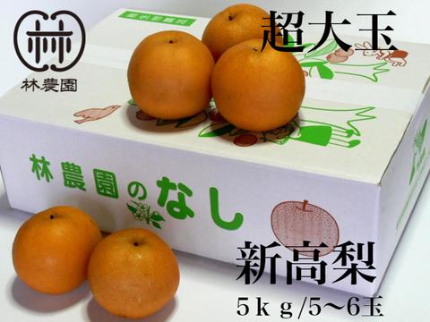 特別・超大玉! 新高梨 約5kg(5~6玉)