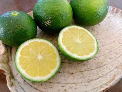 自然栽培青みかん 6kg 摘果みかん